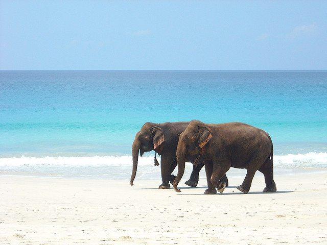 Andaman and Nicobar Source: https://www.flickr.com/photos/rabanito/3416817267