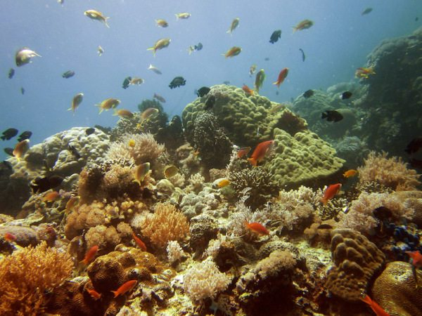 PG coral reef, Philippines